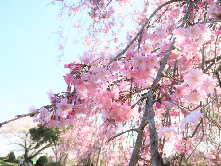 緑の楽しみ ~春の彩のはじまり~